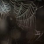 cobwebs-12