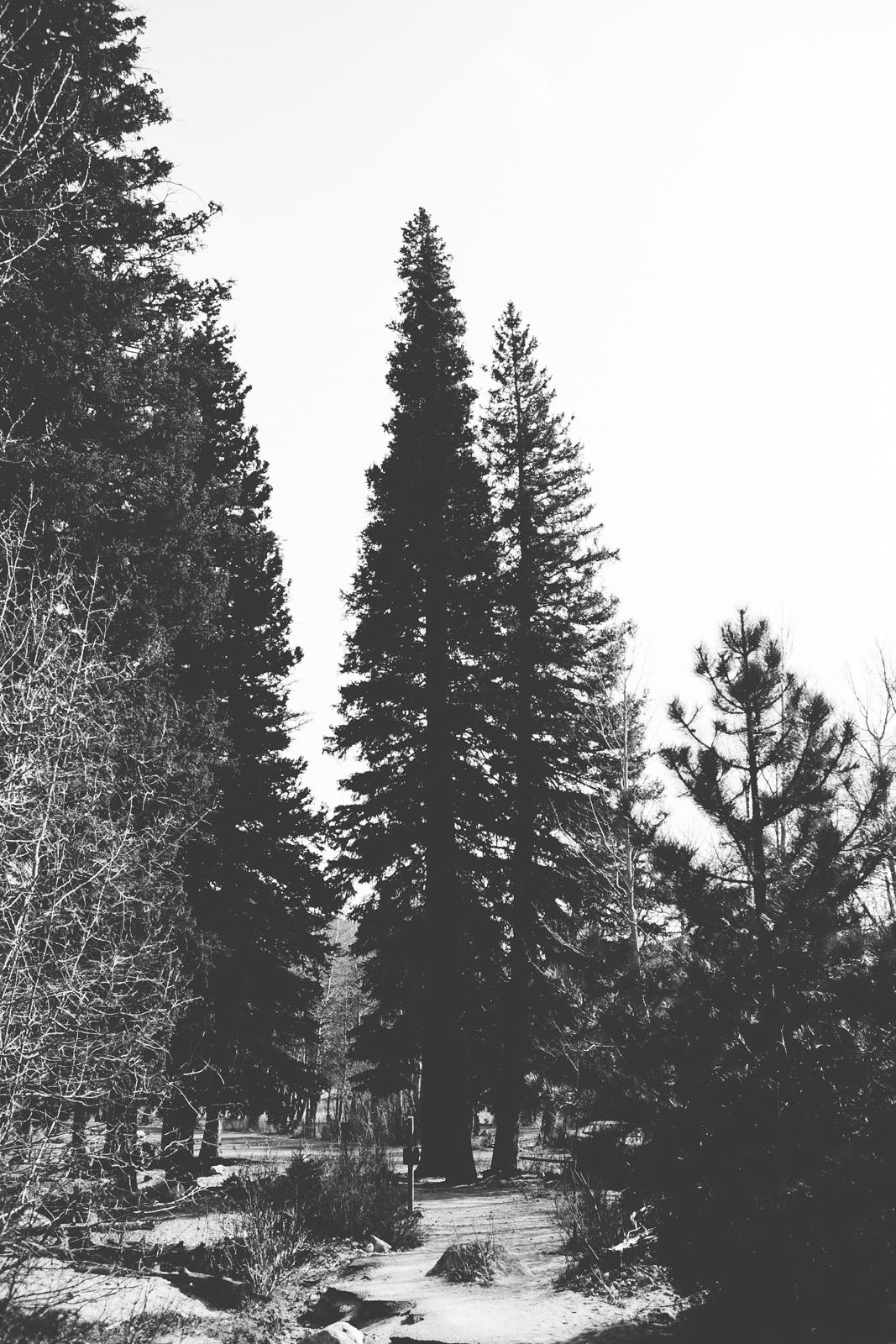Colorado2014-41
