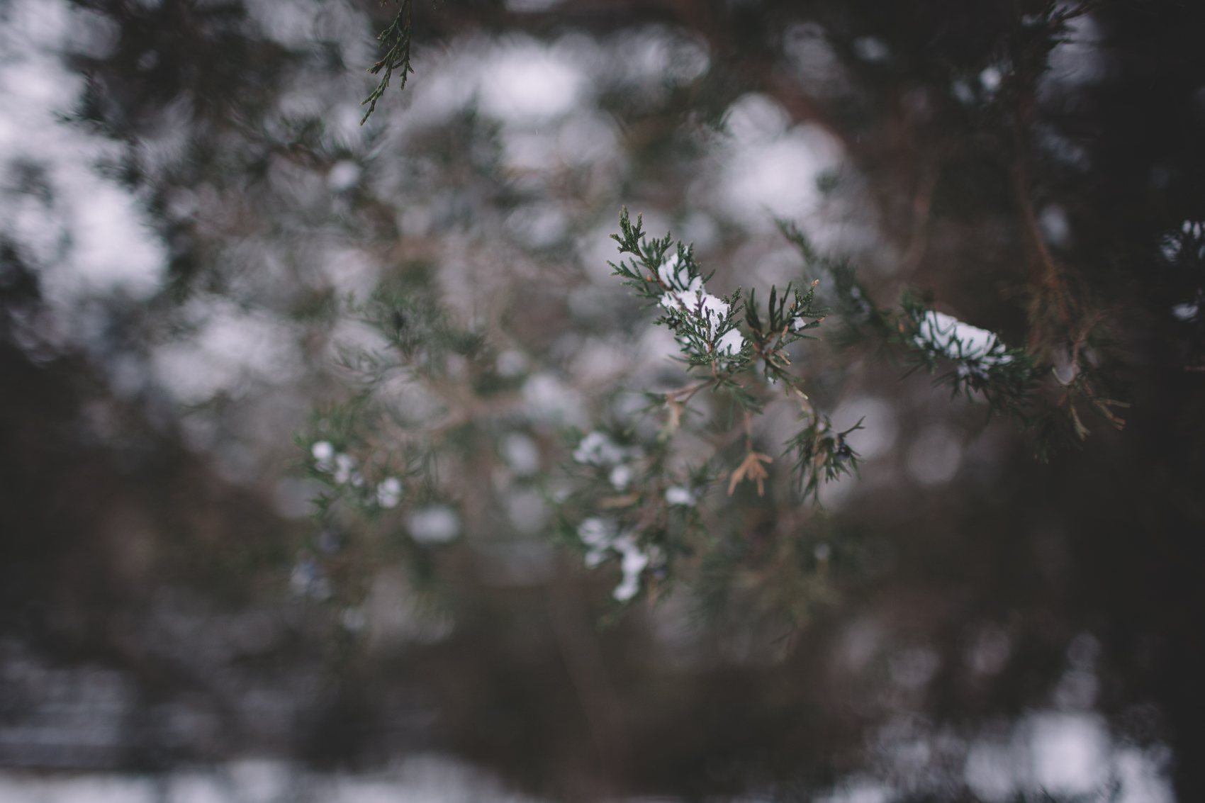 snowday2015-1