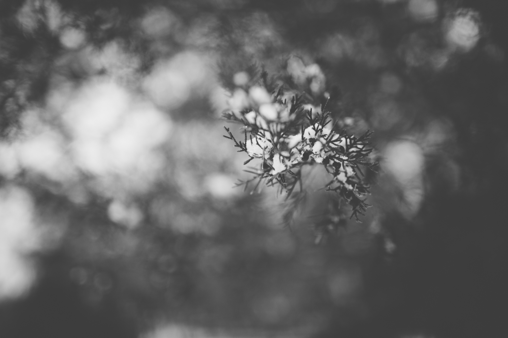 snowday2015-2
