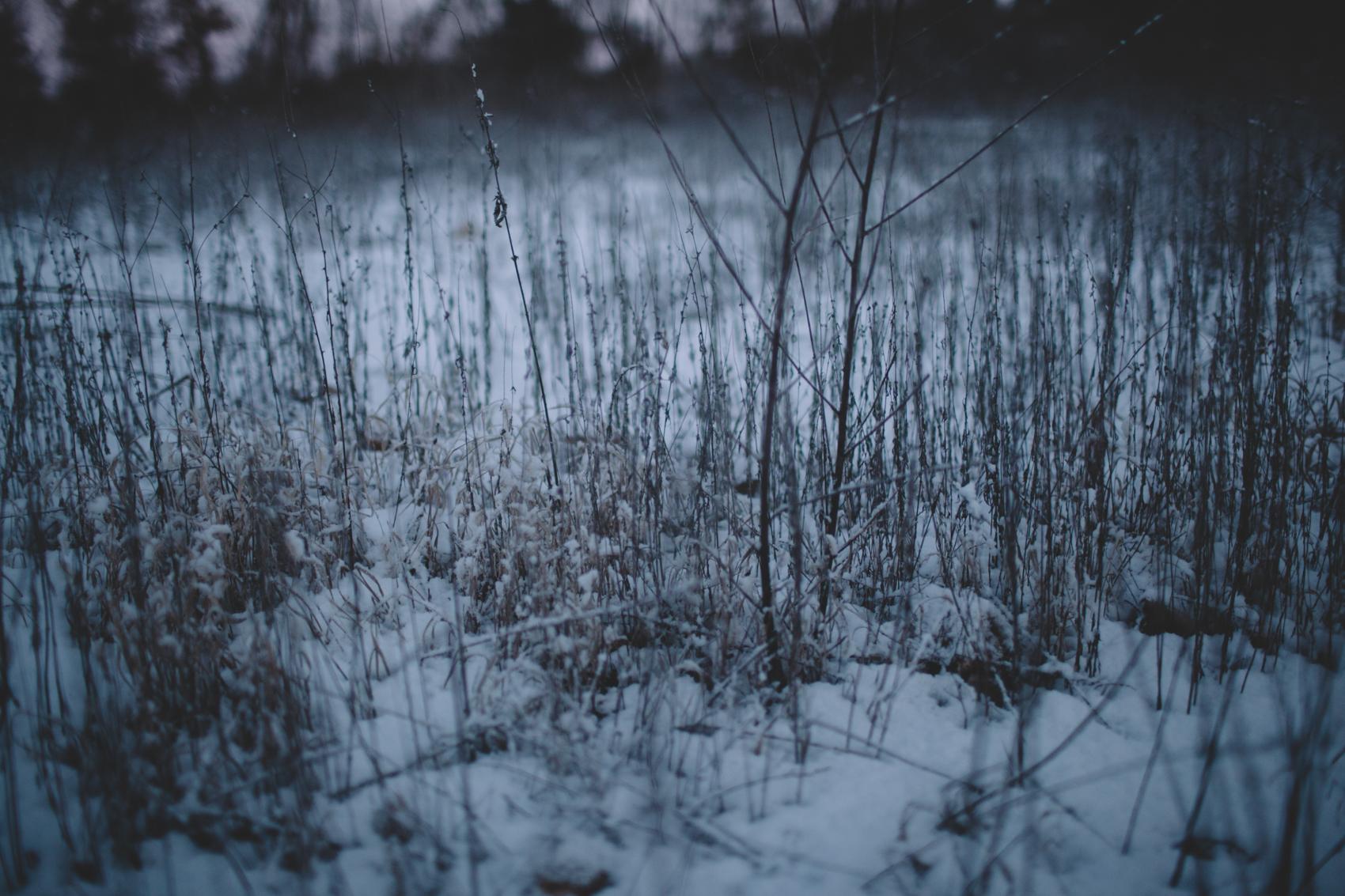 snowday2015-21