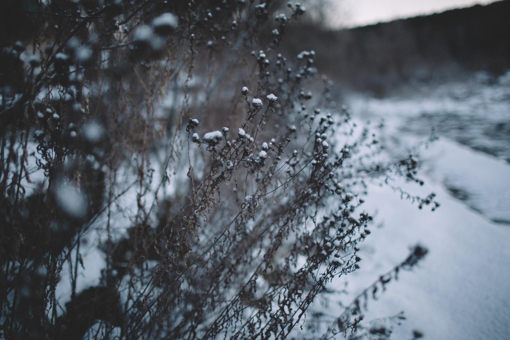 snowday2015-23