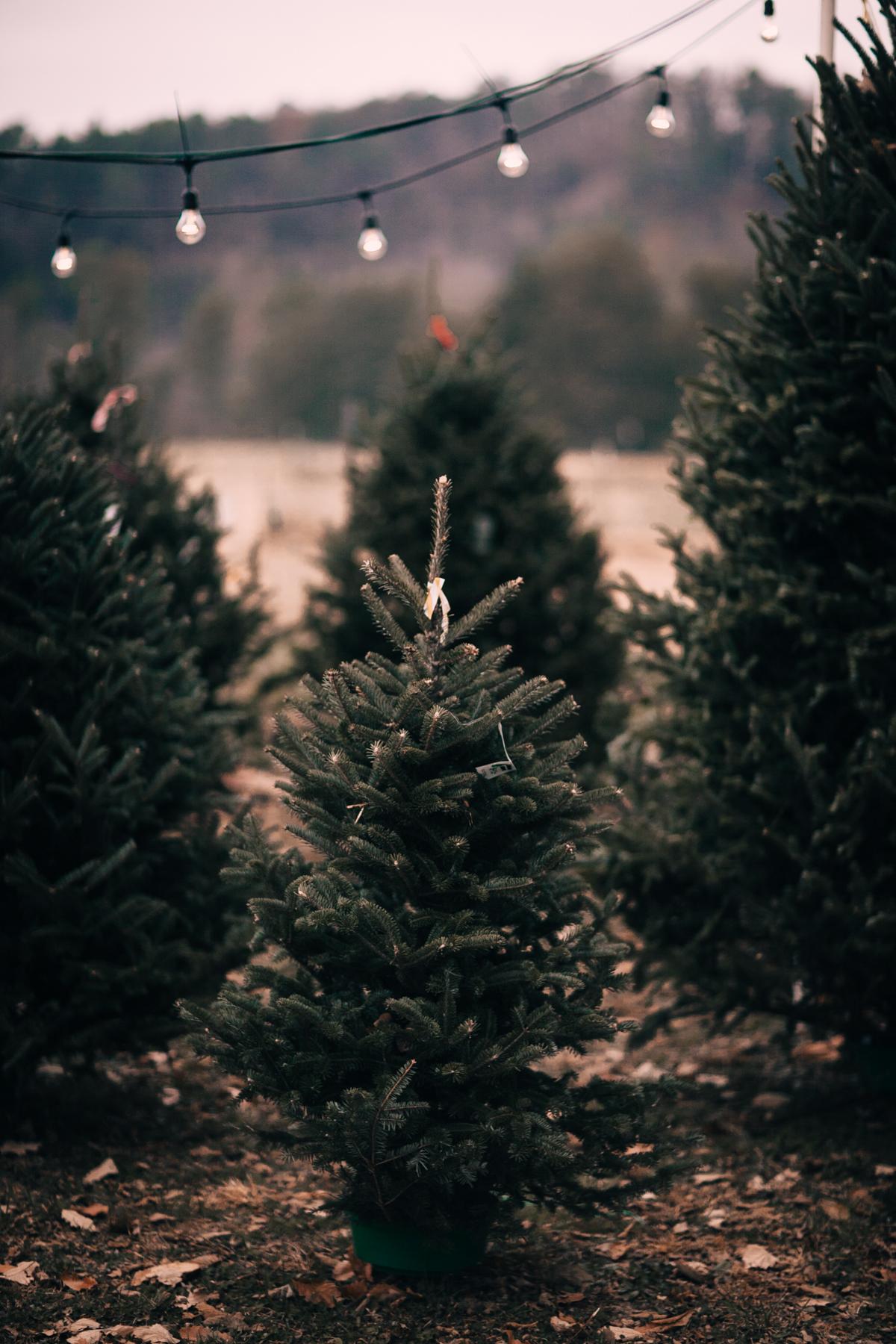 wareaglechristmas-3